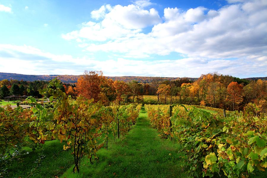 Autumn Photograph - Six Miles Creek Vineyard by Paul Ge