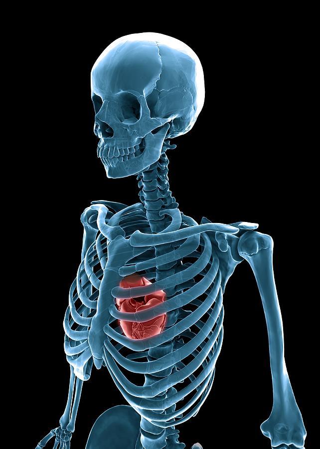 Vertical Digital Art - Skeleton And Heart, Artwork by Andrzej Wojcicki