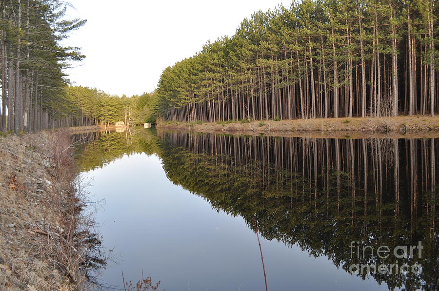 Reflection Photograph - Skinny Trees by Luke Moore