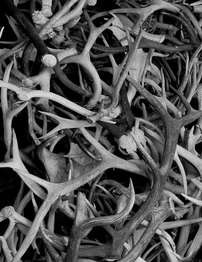 Eastern Oregon Photograph - Skull And Antlers by Jen TenBarge