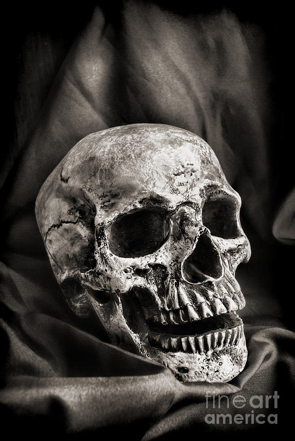 Skull Photograph By HD Connelly