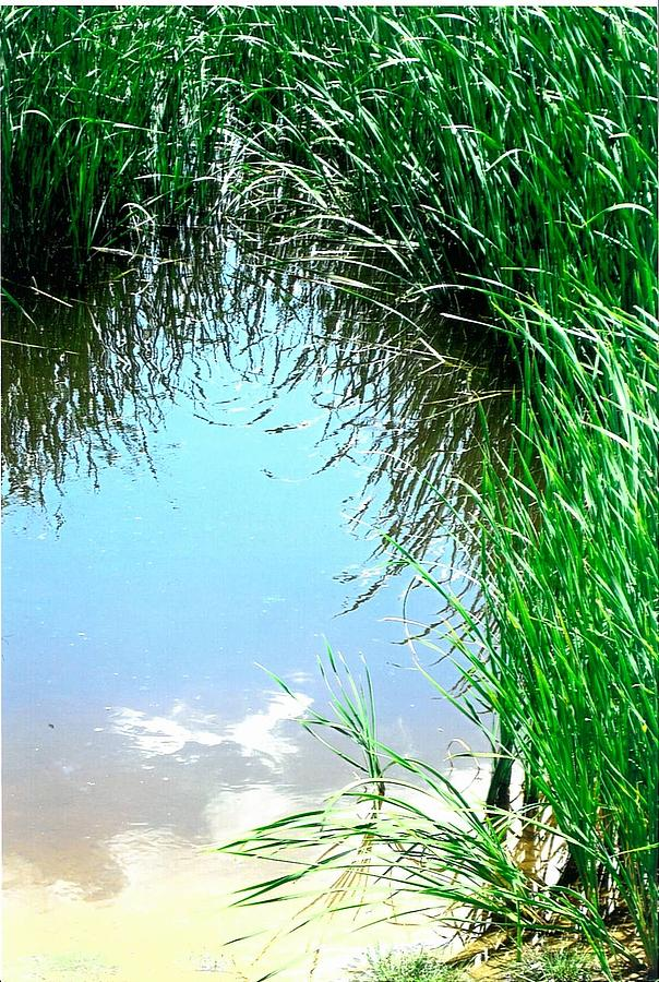 Pond Photograph - Sky Reflected by Suzanne Fenster