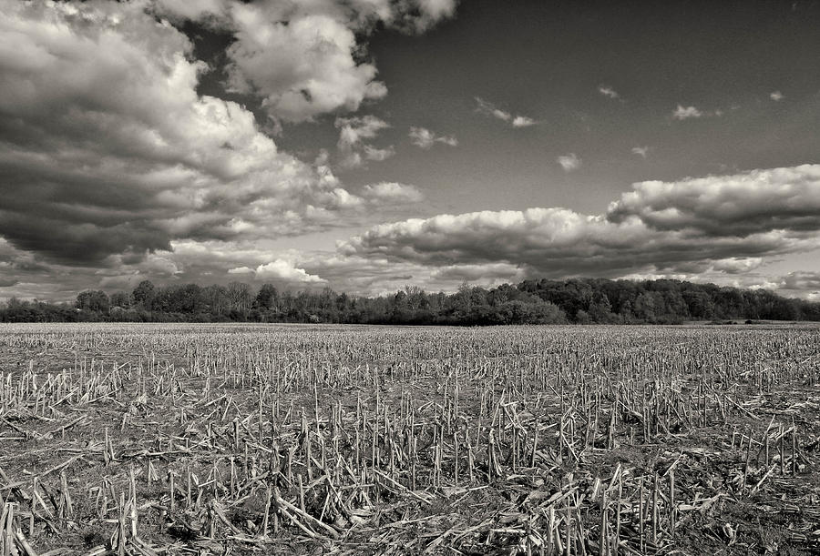 Monochrome Landscape Photograph - Skyway by Rachel Cohen