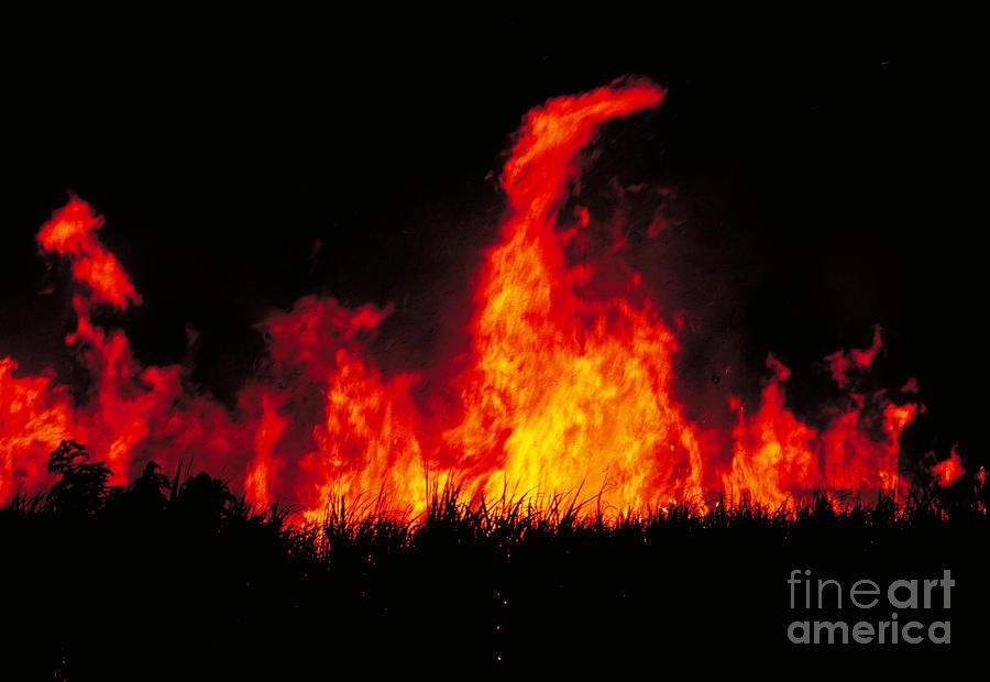 Costa Rica Photograph - Slash And Burn Agriculture by Dante Fenolio