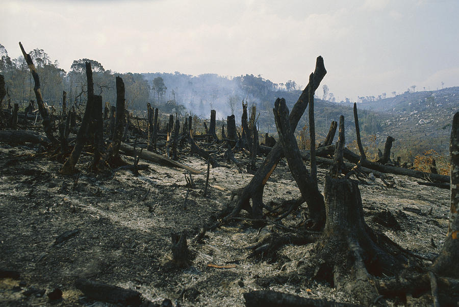 Mp Photograph - Slash And Burn Agriculture, Where by Konrad Wothe