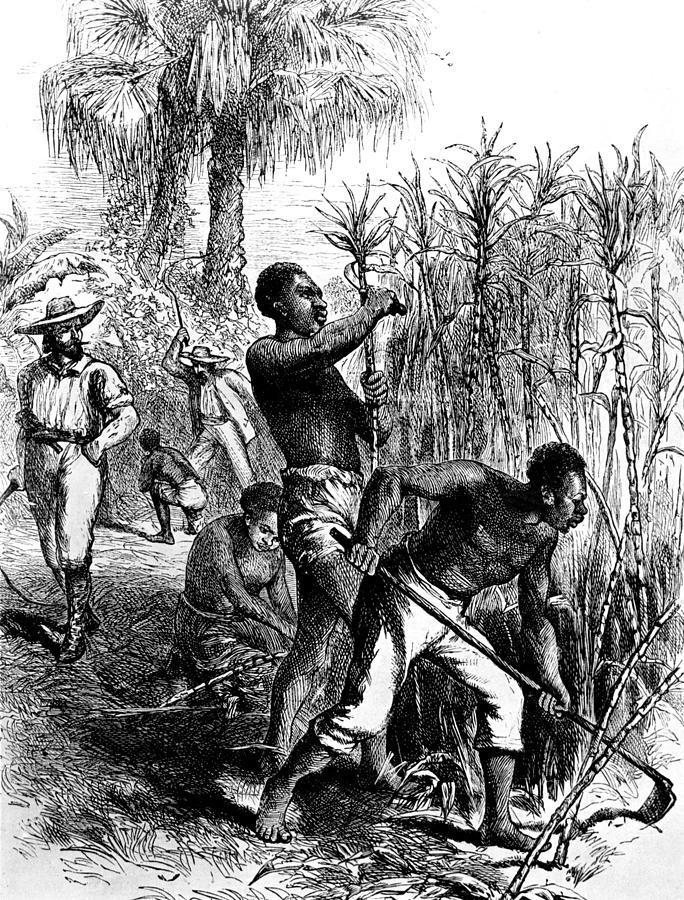 caribbean plantation coloring pages - photo#29