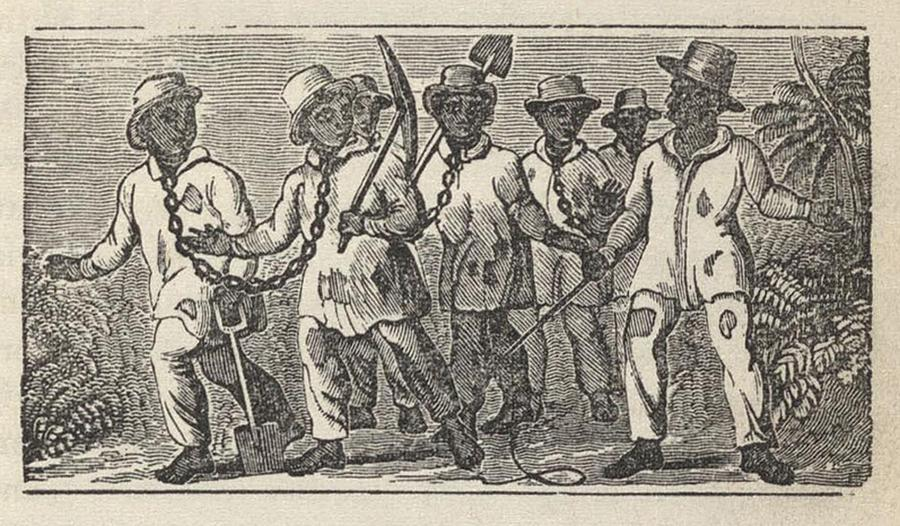 History Photograph - Slaves Often Travel In �coffles,� by Everett