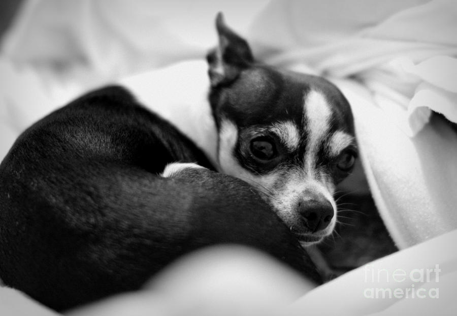 Dog Photograph - Sleep by Bret Worrell