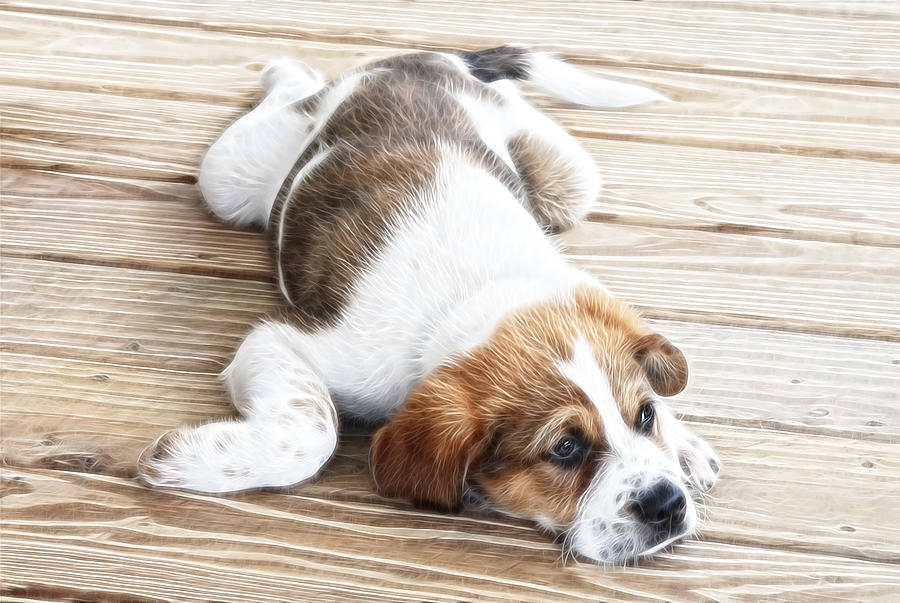 Puppy Photograph - Sleep Where You Fall by Tilly Williams