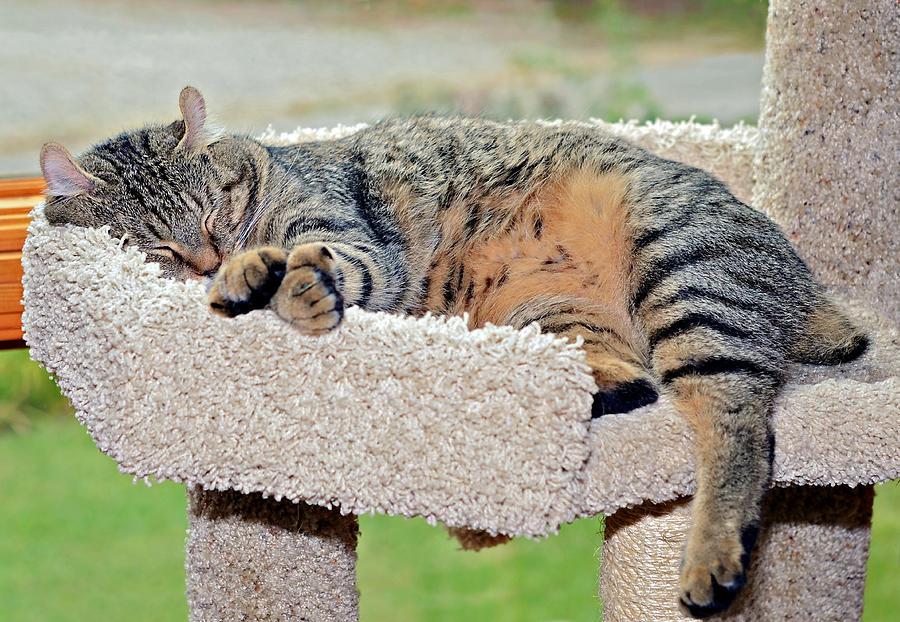 Kitty Photograph - Sleeping Cat by Susan Leggett