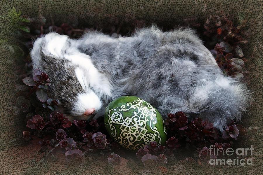 Easter Eggs Photograph - Sleeping Easter Bunny by Danuta Bennett