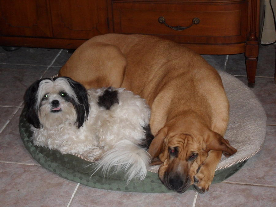 Dogs Photograph - Sleeping In A Circle by Val Oconnor