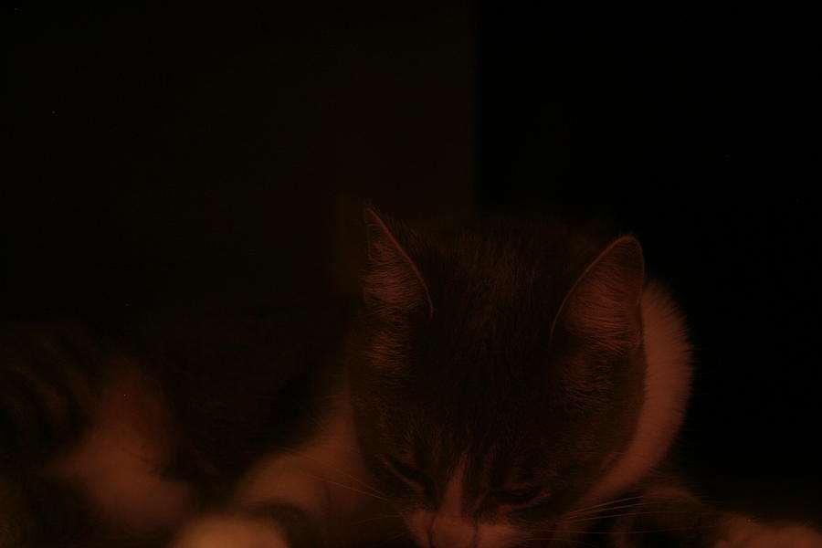 Kitten Photograph - Sleeping In An Orange Room by Eduardo Bouzas