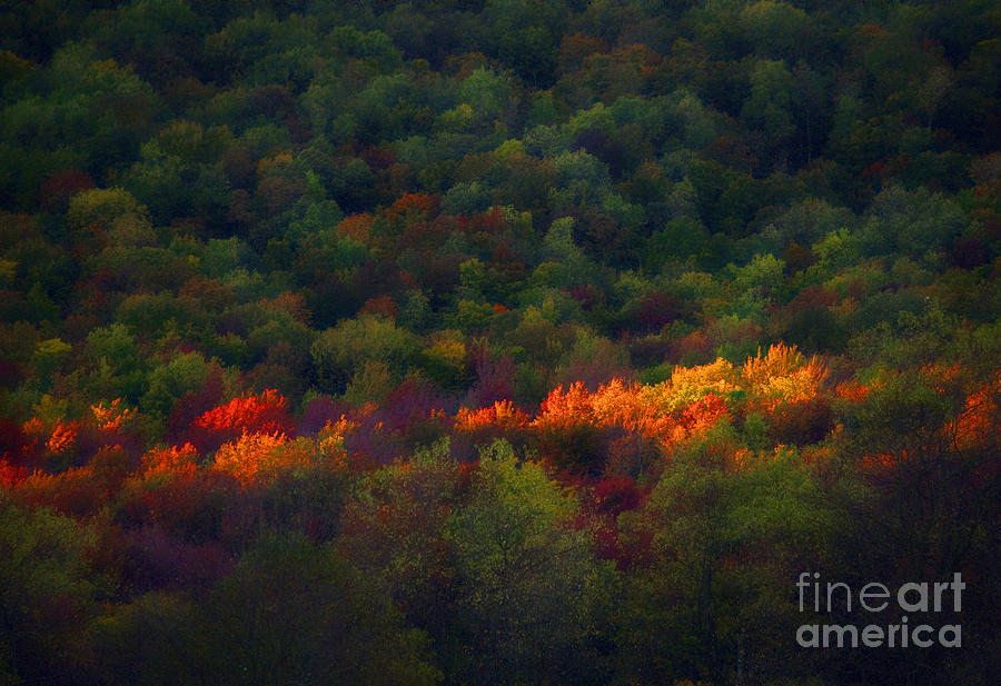 Fall Photograph - Slice Of Light Evening In Fall by Dan Friend