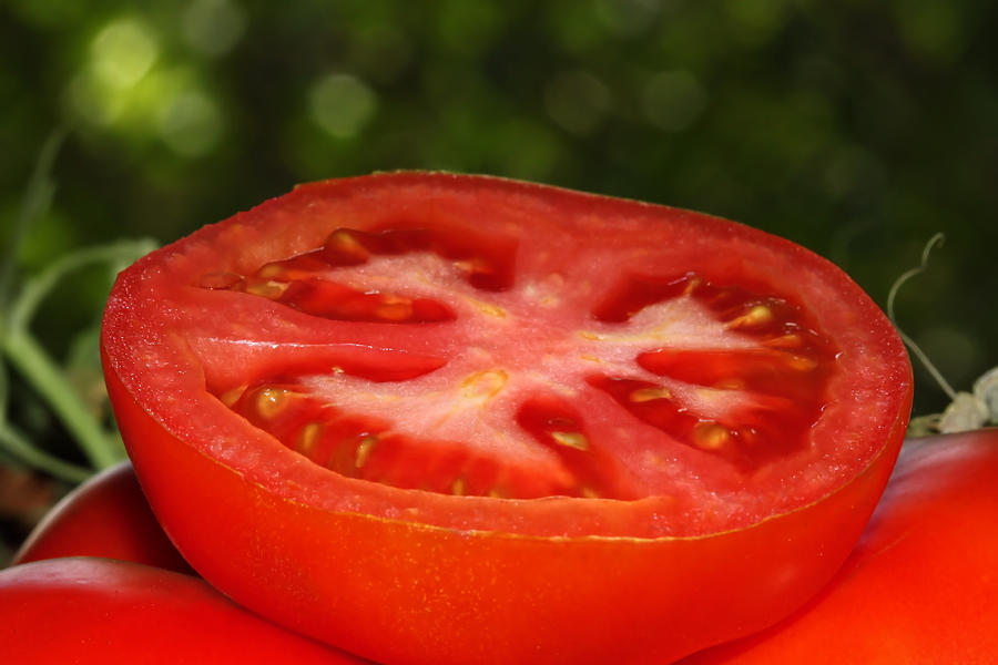 sliced tomato in the garden photograph by tracie kaska