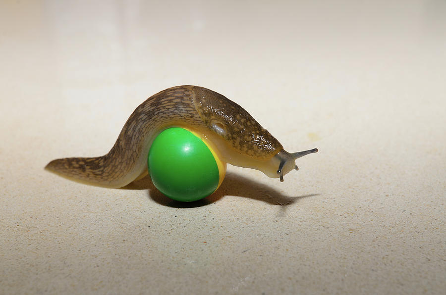 Ball Photograph - Slug on the ball by Michael Goyberg