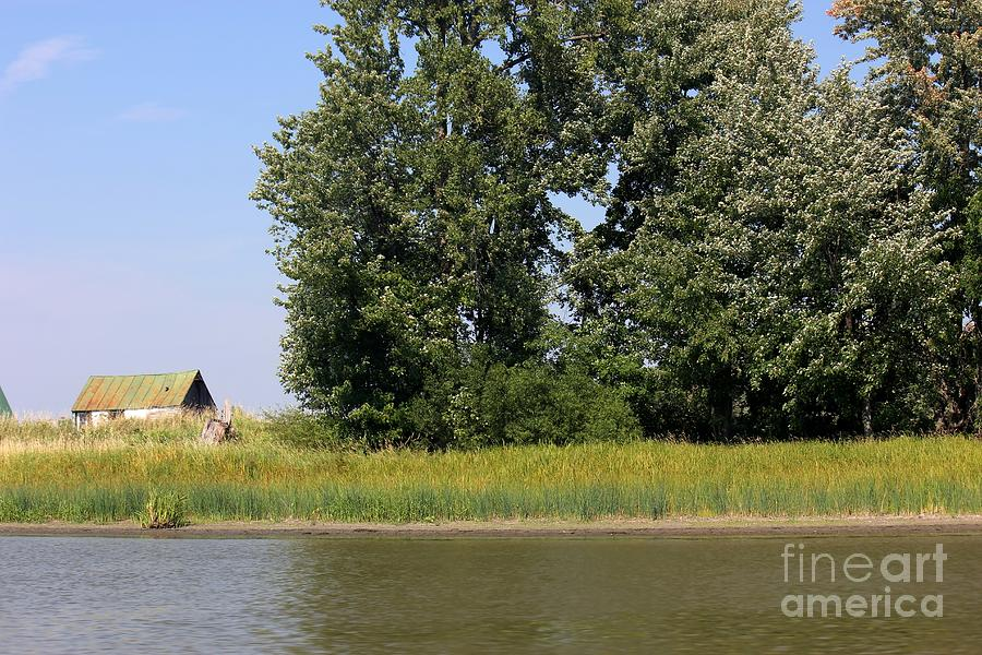 Barn Photograph - Small Barn Big Trees by Sophie Vigneault