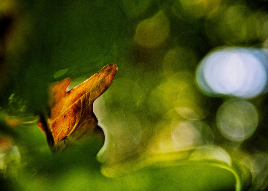 Leaves Photograph - Small Boat Big Ocean by Odd Jeppesen