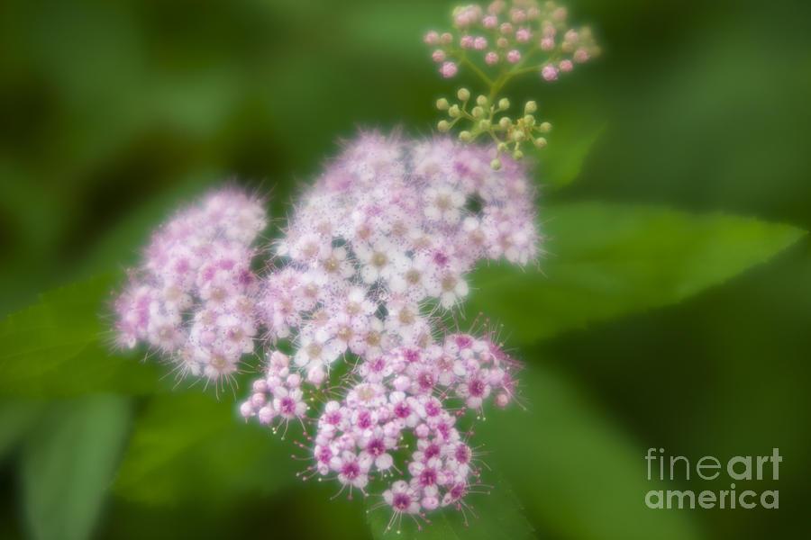 Small Photograph - Small flowers by Tad Kanazaki