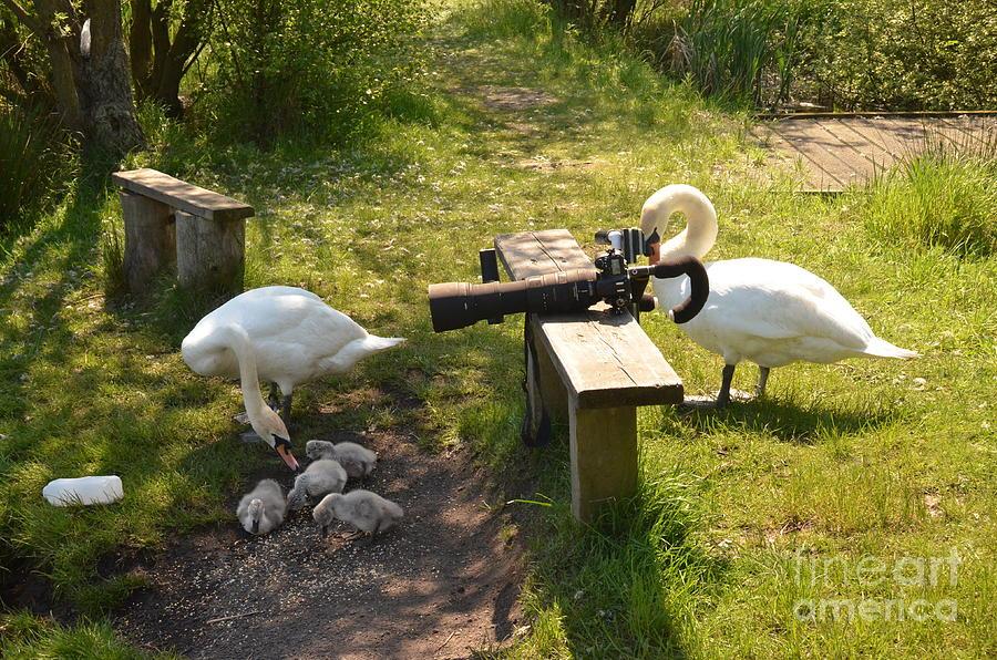 Swans Photograph - Smile You Lot by Doug Thwaites