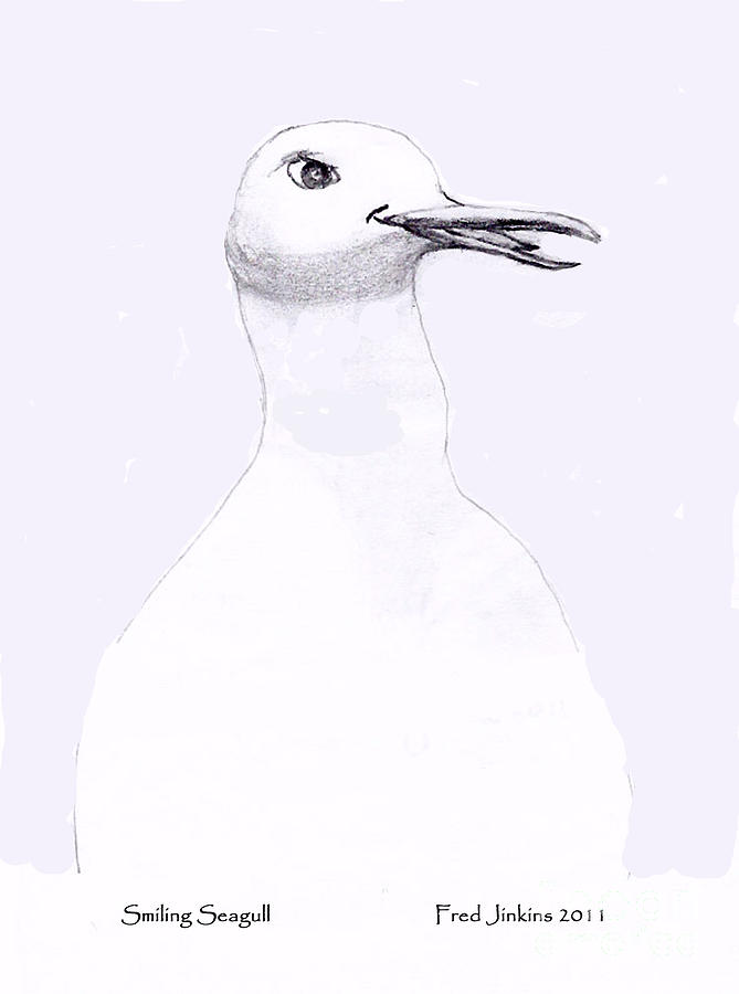 Smiling Seagull Drawing by Fred Jinkins
