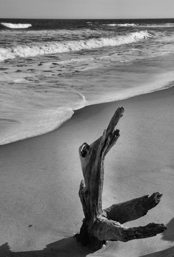 Limb Photograph - Snag And Surf by Steven Ainsworth