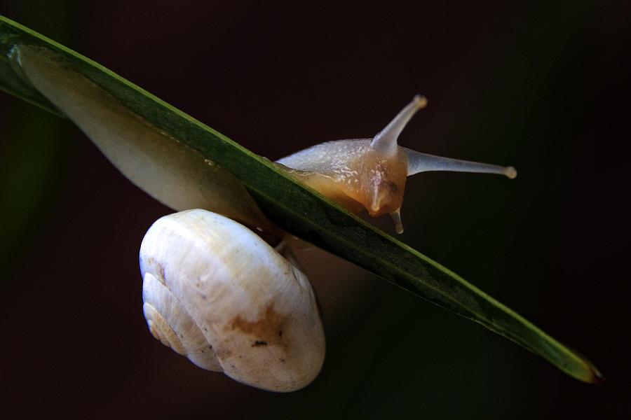 Animal Photograph - Snail by Stelios Kleanthous