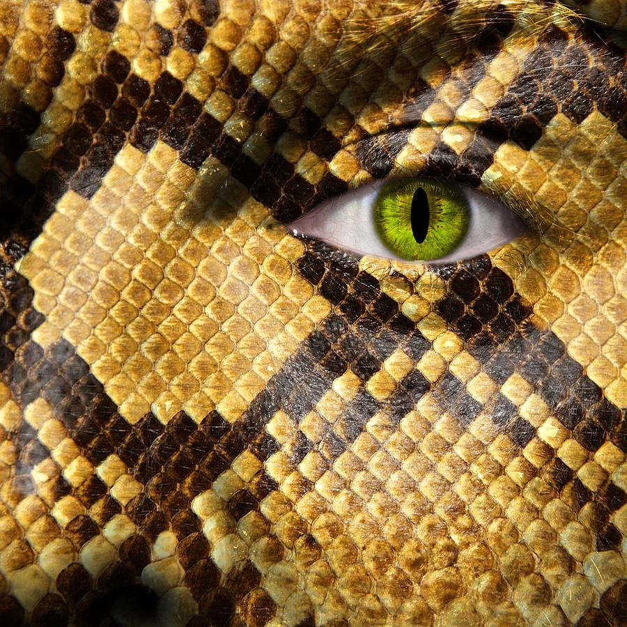 Amphibia Photograph - Snake Eye by Semmick Photo