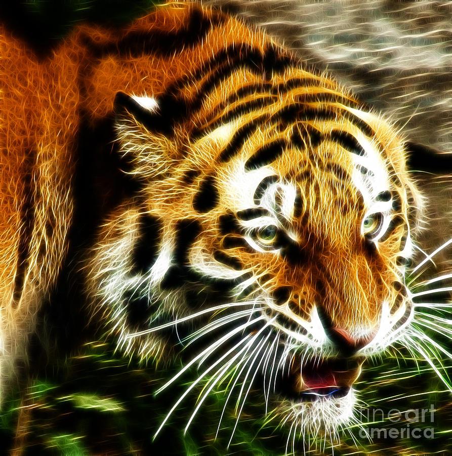 Tiger Photograph - Snarling Tiger by Darleen Stry