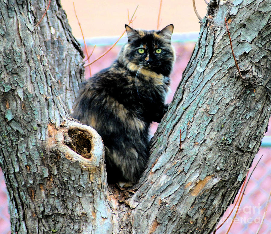 Cat Photograph - Snickers Caught In The Act by Cheryl Poland