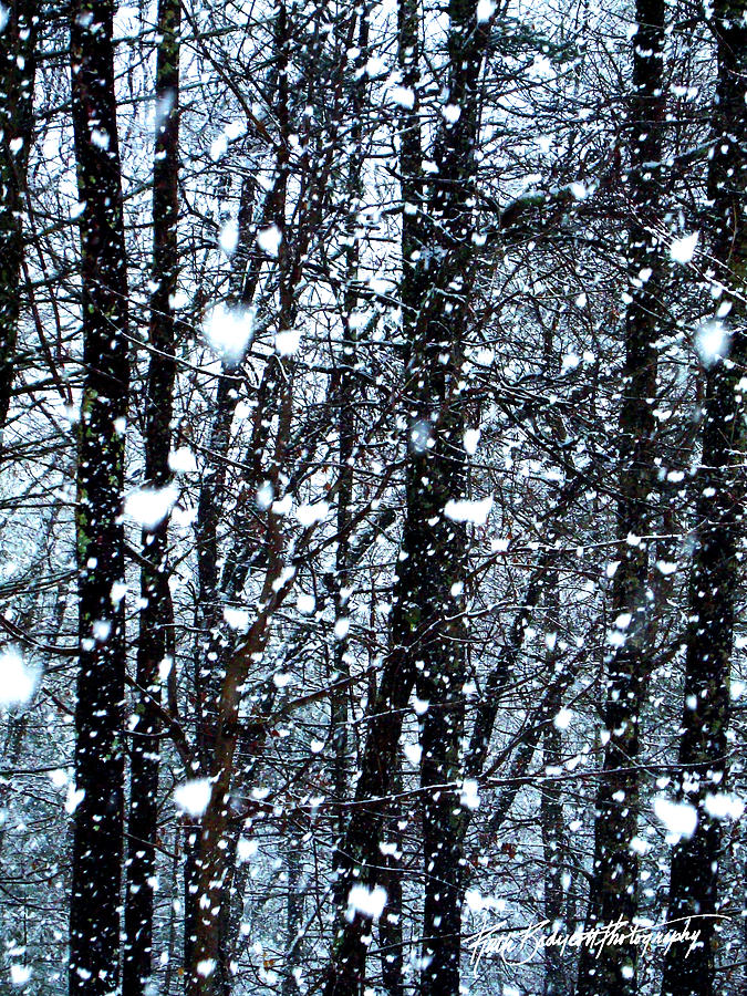 Landscape Photograph - Snoball Flakes by Ruth Bodycott