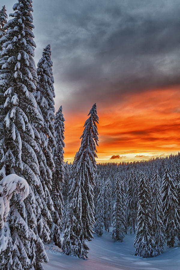 Bulgaria Photograph - Snow And Sunrise by Evgeni Dinev
