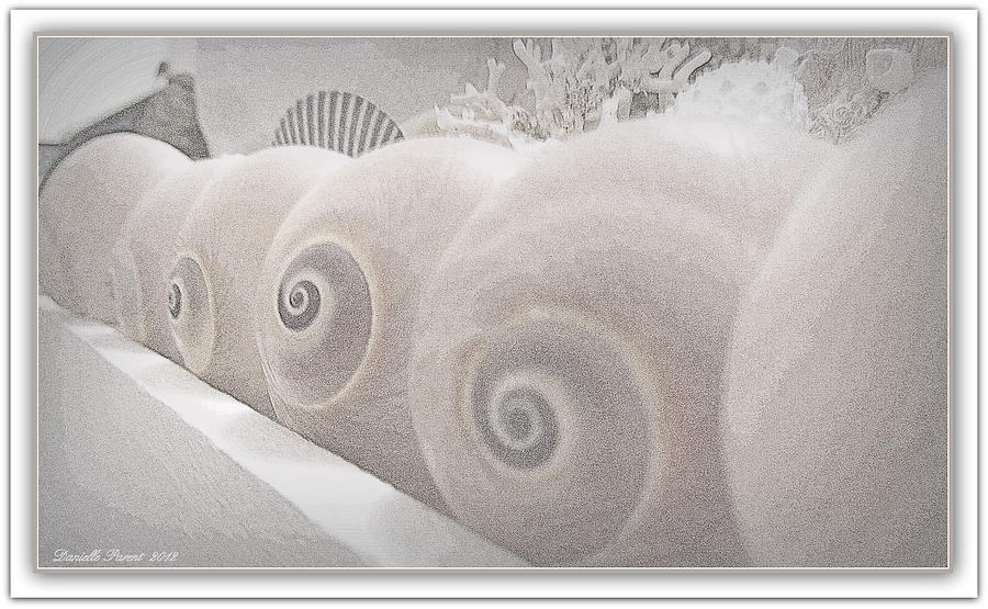 Sea Shells Photograph - Snow Babies by Danielle  Parent