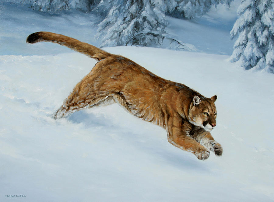 Snow Bound by Peter Eades