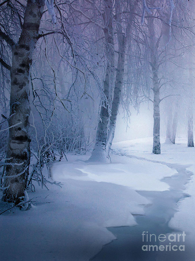 Birch Painting - Snow Brook by Robert Foster