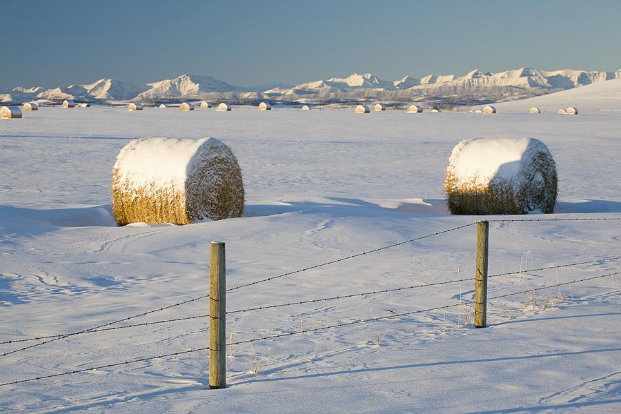 Alberta Photograph - Snow Covered Hay Bales In A Snow by Michael Interisano