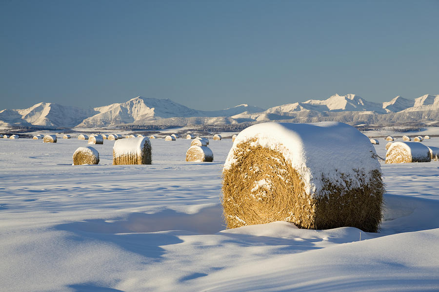 Agriculture Photograph - Snow-covered Hay Bales Okotoks by Michael Interisano