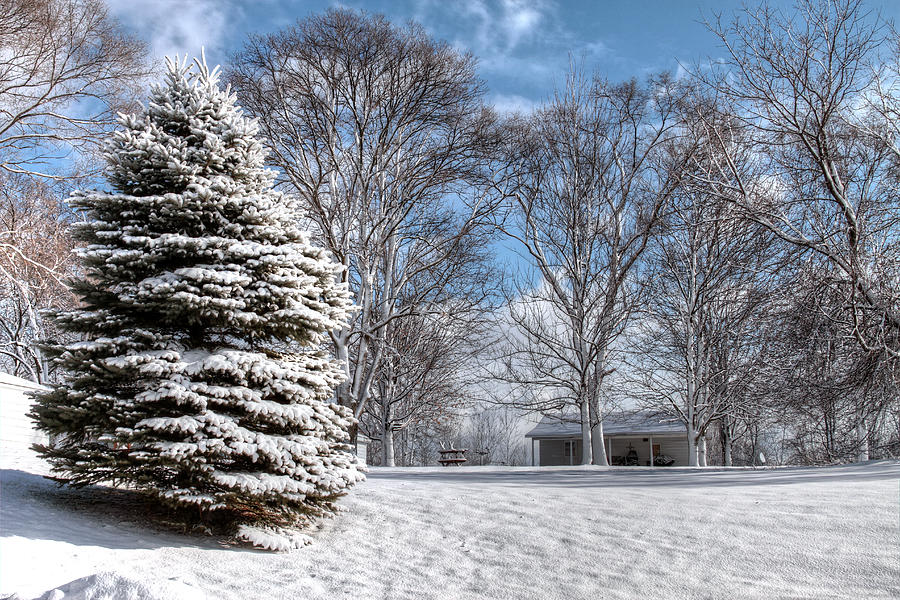 Snow Photograph - Snow Covered Pine by Richard Gregurich