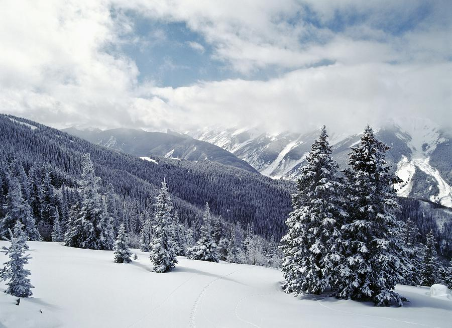Snow covered pine trees on mountain photograph by axiom - Images of pine trees in snow ...