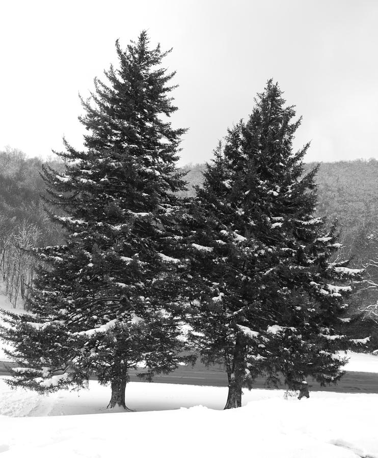Trees Photograph - Snow Covered Trees by Carrie Munoz