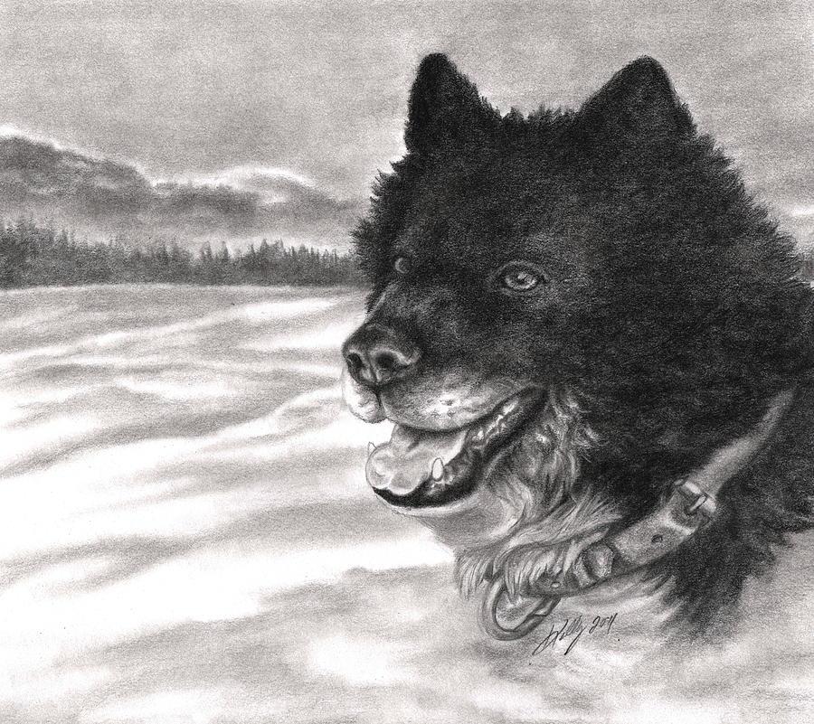 Dog Drawing - Snow Dog by Kathleen Kelly Thompson