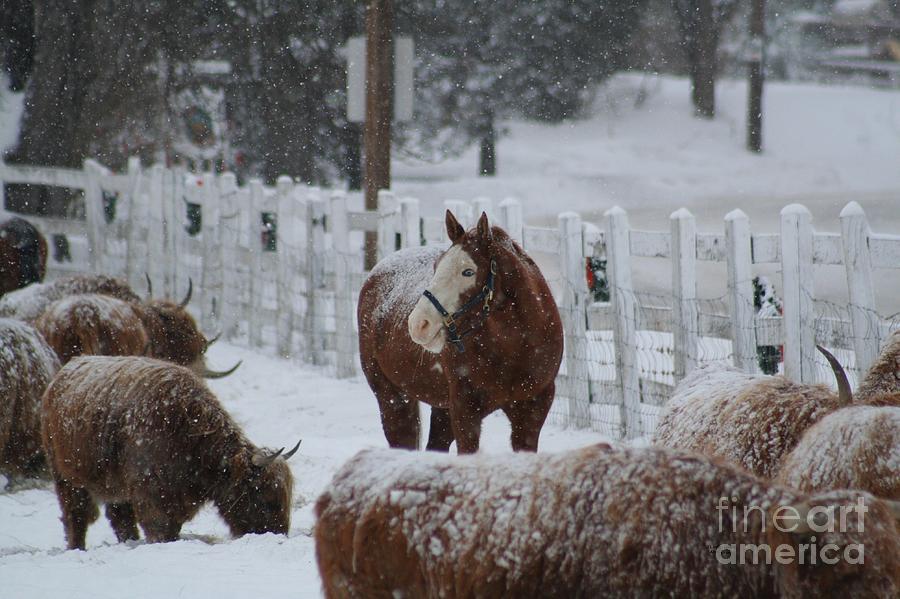Horse Photograph - Snow Horse by Linda Jackson