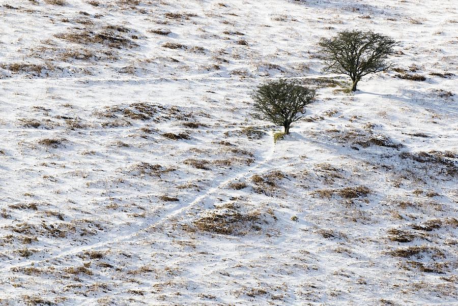 Plant Photograph - Snow On Moorland by Adrian Bicker