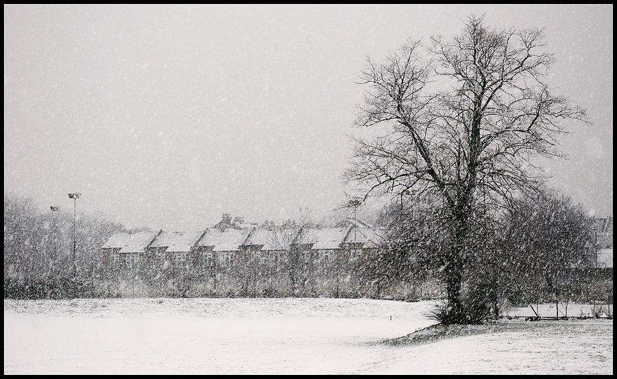 Branches Photograph - Snow Scape London Sw by Lenny Carter