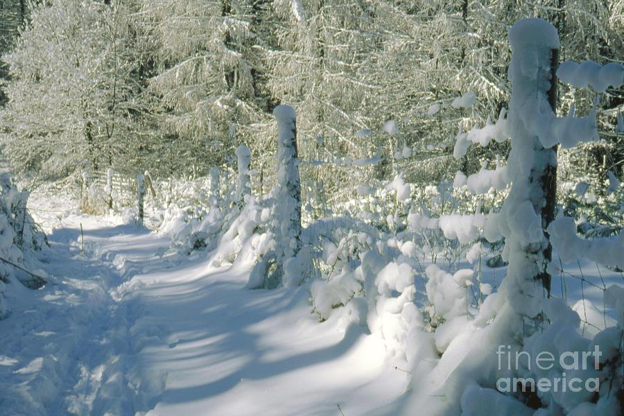 Landscape Photograph - Snowy Footpath In Winter Wonderland by Heiko Koehrer-Wagner