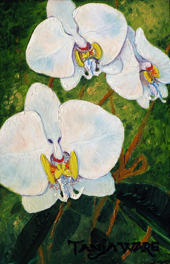 Orchids Painting - Snowy Ladies by Tanja Ware