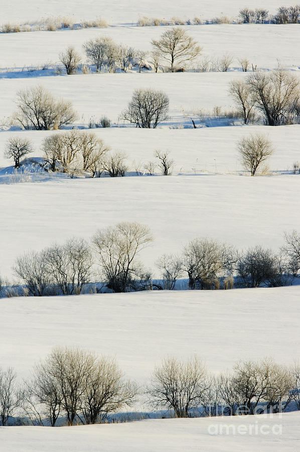 Cold Photograph - Snowy Landscape by Jeremy Woodhouse