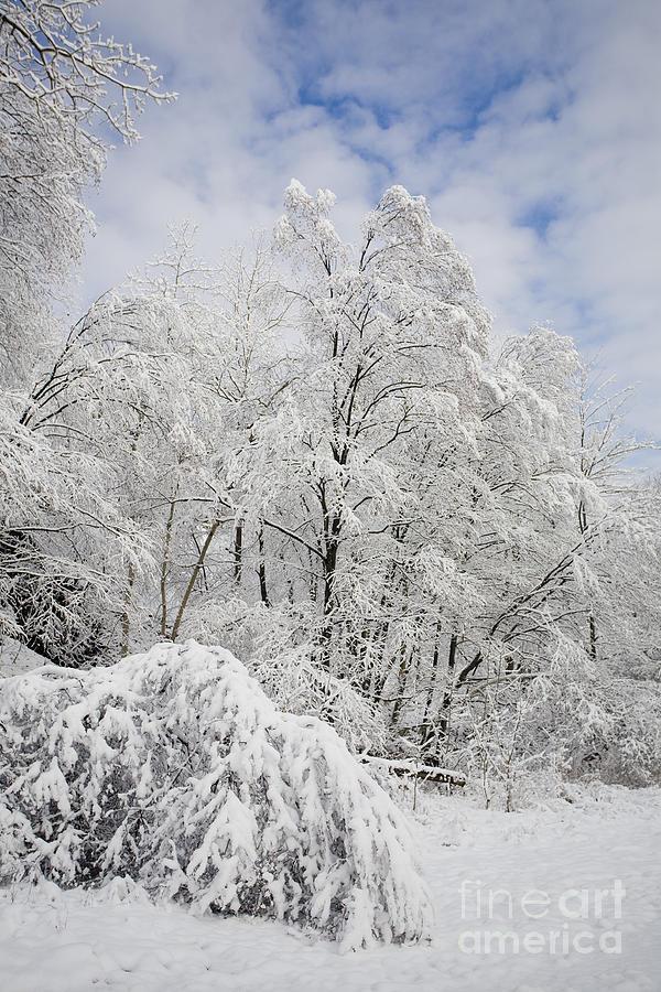 Cold Photograph - Snowy Landscape by Len Rue Jr and Photo Researchers