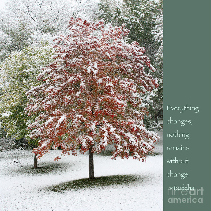 Buddha Photograph - Snowy Maple With Buddha Quote by Heidi Hermes