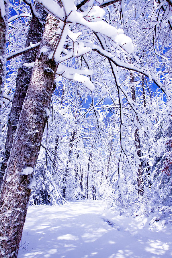 Forest Paths Photograph - Snowy Path by Rob Travis